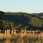 interfaceaustraliaP1050766-pressingcloth-sheep