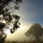 interfaceaustraliaP1520153-shop now-trees fence in fog