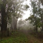 interfaceaustraliaP1840179-products-foggy lane