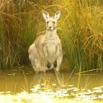 interfaceaustraliaP2200408-shop now-roo in dam