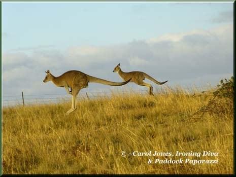 03 Ironing Diva Kangaroos x 2 Hopping