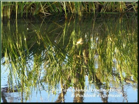 Ironing Diva Love Letters #6 P1730410 Bird Skims Water