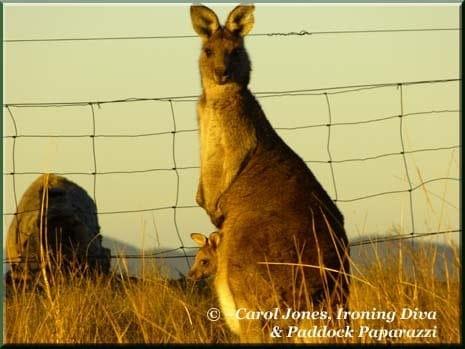 Ironing Diva Metro Pro 011 P1600986 Kangaroo + Joey