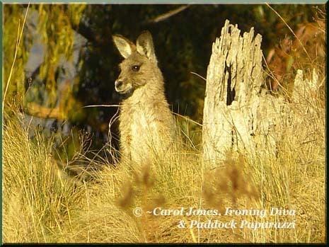 Ironing Diva Metro Pro 011 P1610262 Kangaroo
