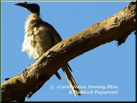 Ironing-Diva Metro Pro 14 Friarbird