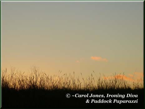 Ironing-Diva-Paddock-Grass-At-Sunrise