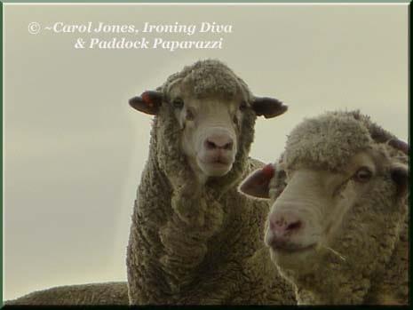 Ironing-Diva-Sheep-x-2