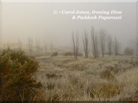 Ironing Diva Metro Pro 037 P2480507 Paddocks In Frost & Fog
