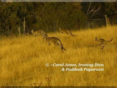 Ironing Diva Metro Pro Love Letter 018 P2450649 Kangaroo Mob Hopping