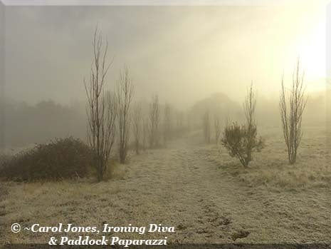 Ironing Diva Metro Pro 051 P2500795 Walking Track In Mist And Frost. 2016 July 04