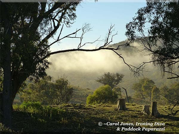 ironing-diva-metro-pro-087-an-ethereal-morning-mist-rising-up-from-the-hollows-in-the-hills-2016-september-15