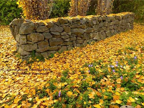 Garden. Rock Wall. Side Gate. 500 x 375 2017 August 05
