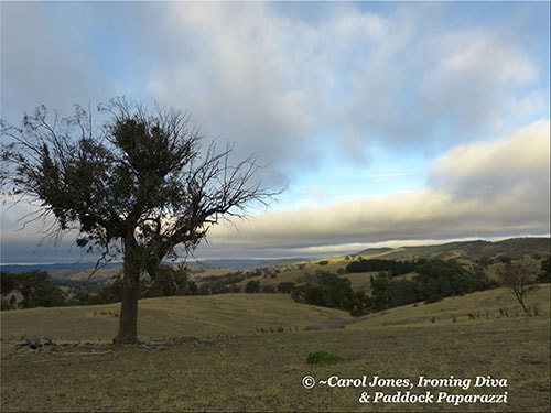 A Blustery Morning 500 x 375 2016 May 12 (BLOG)