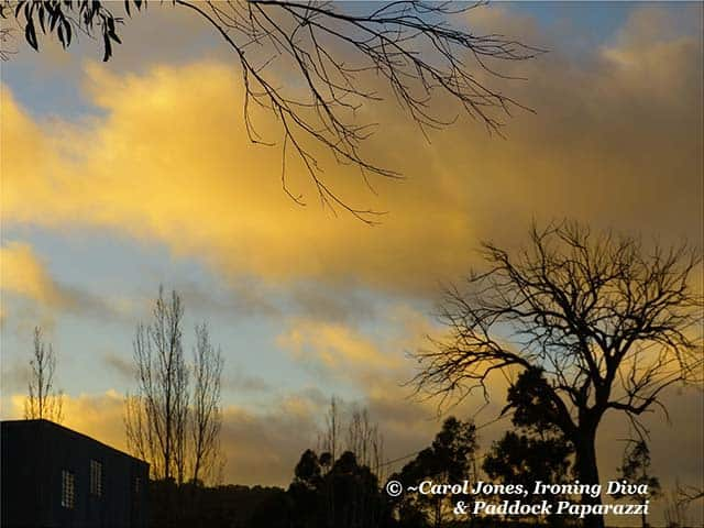 Butterscotch Clouds Fill The Morning Sky Over My Woolshed.