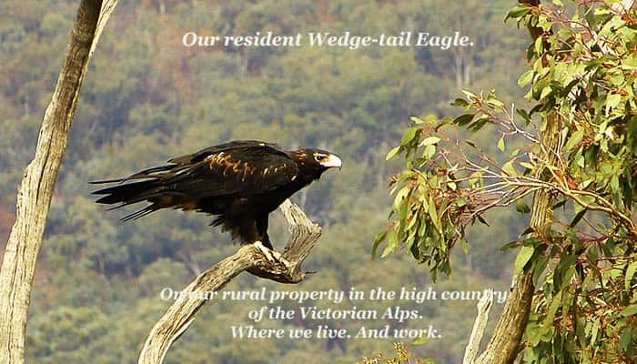 The Fitz Like A Glove Ironing Board Cover And Other Goodies. Wedge-tail Eagle.