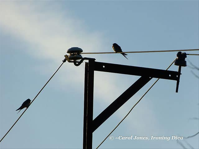 Birds On A Wire In Early Dappled Light.