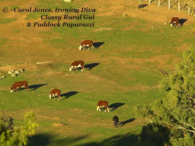 Swifts Creek. Cattle Below.